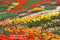 Выставка тюльпанов 2012 в Никитском ботаническом саду - фоторепортаж