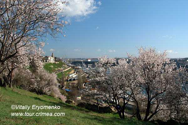 Цветущий Севастополь - фоторепортаж